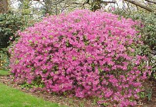 Shrub1 sprucedale gardens mightylinksfo